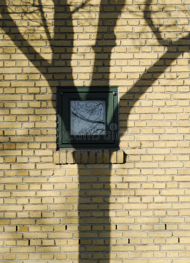 Free Tree Shadow On Window Stock Images - 14304664
