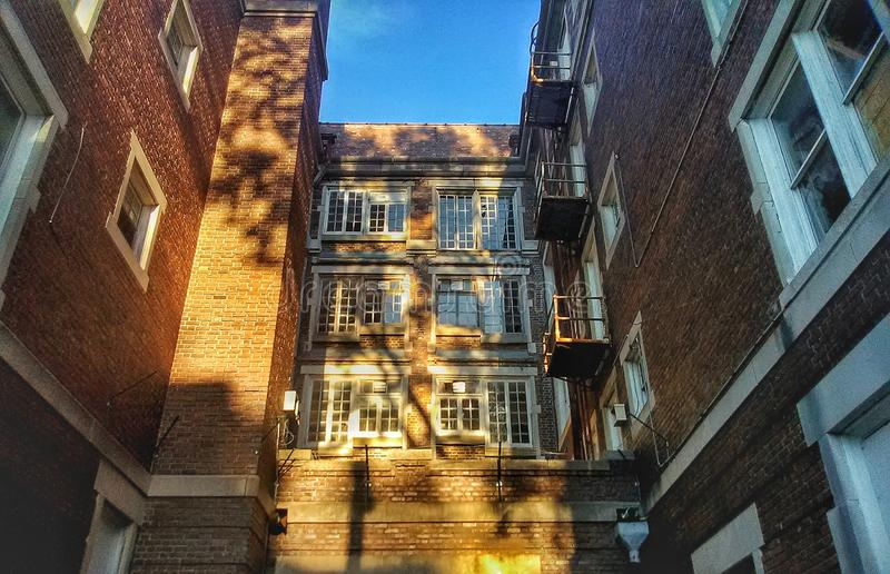 Tree Shadows on Brick Building royalty free stock photography