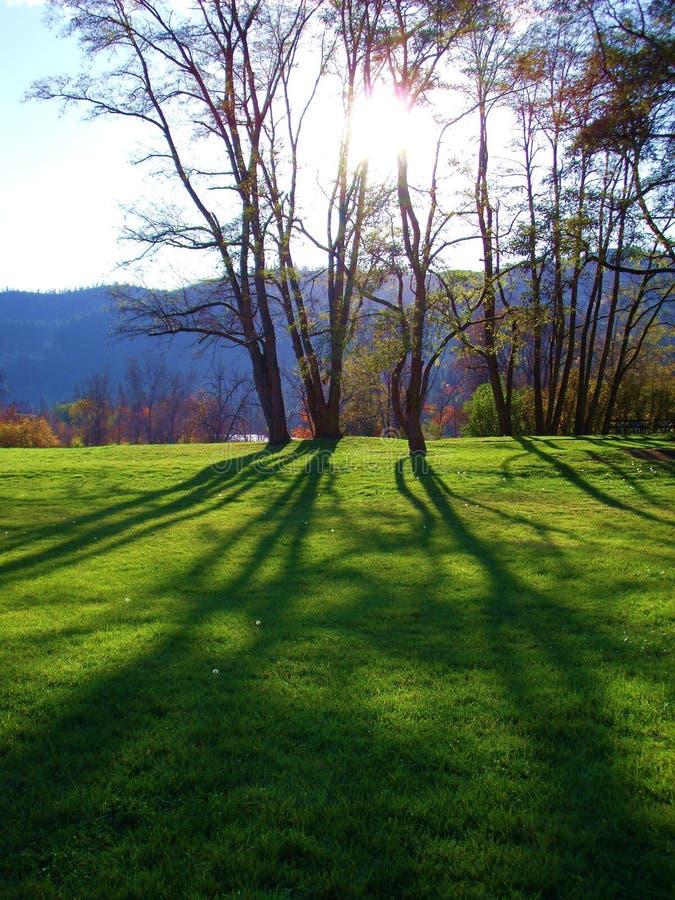 Tree shadows on grass royalty free stock photo