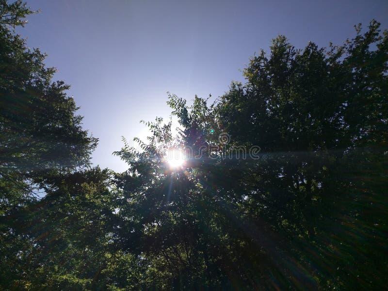 Tree Shiningq. Sun shining through trees from deep blue spring sky royalty free stock image