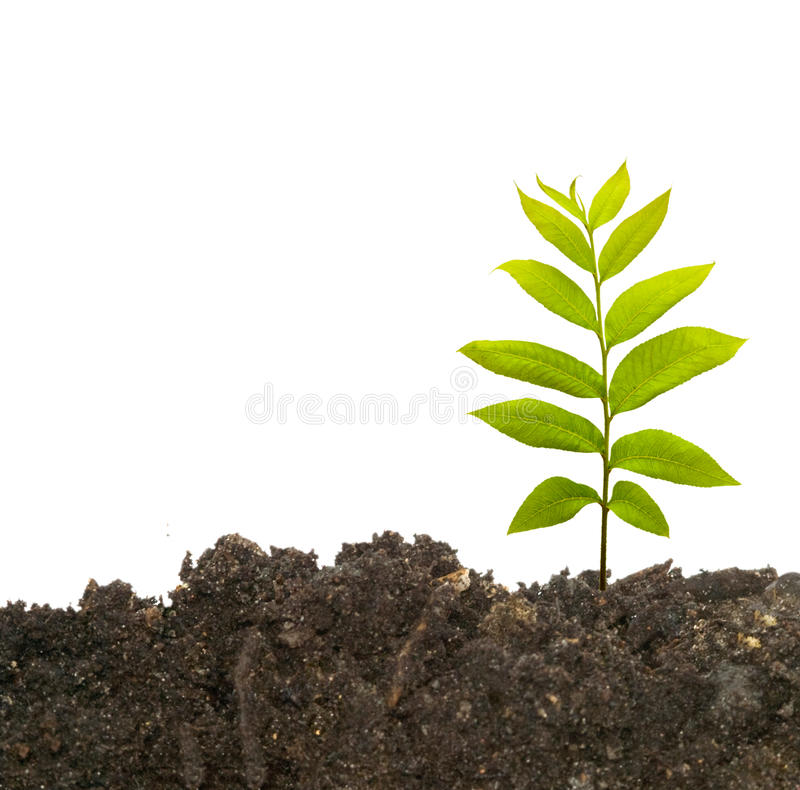 Tree shoot in earth stock images
