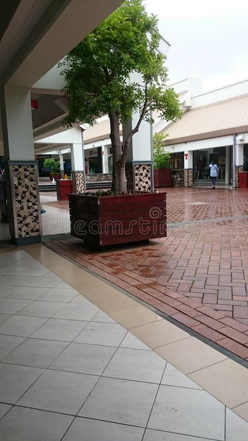 Tree at shopping center on a rainny day stock photo