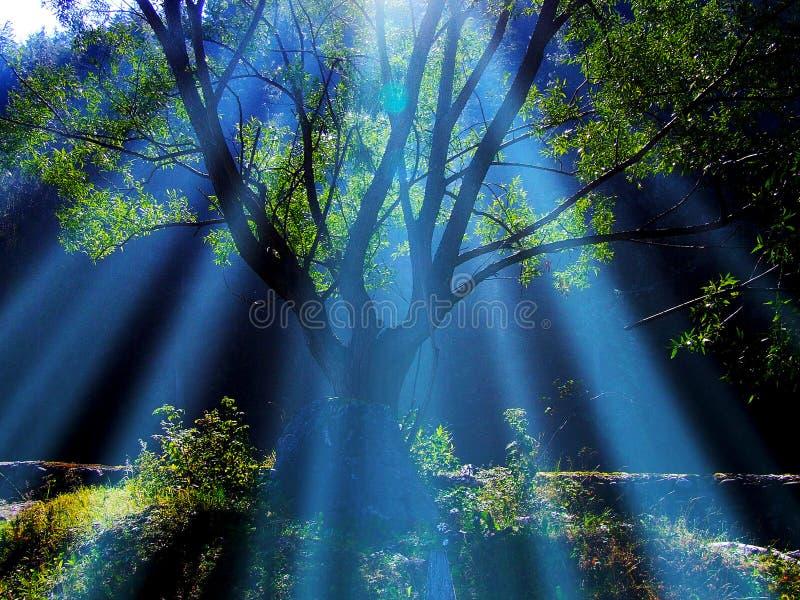 tree royalty free stock image