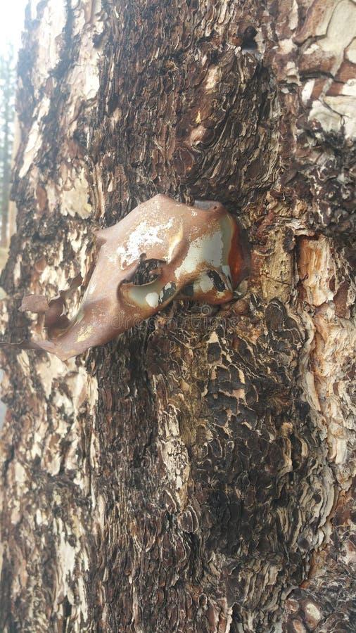 Tree shrapnel stock images
