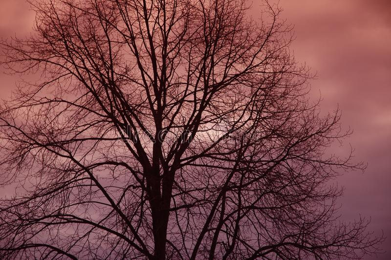 Tree Silhouette Free Stock Photography