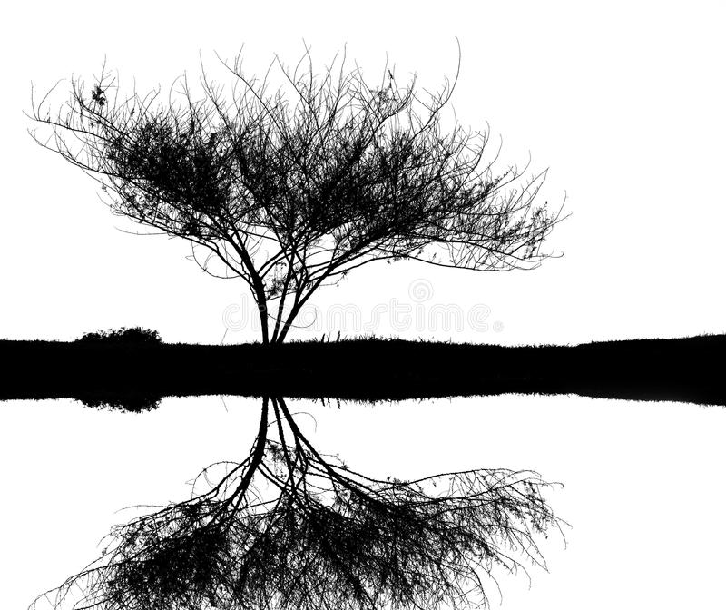 Tree silhouette. Black and white close-up tree inverted image stock illustration