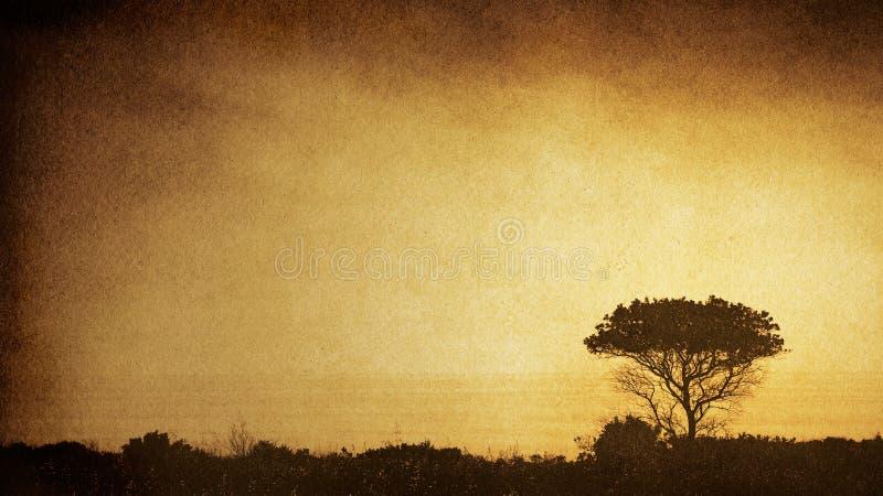 Tree Silhouette stock photo