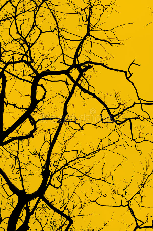 Download Tree Silhouette Royalty Free Stock Photo - Image: 3477745