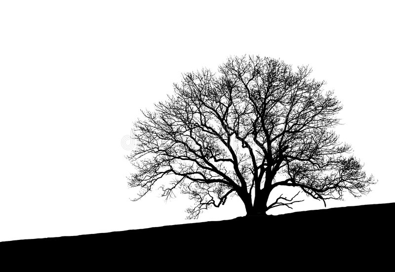 Download Tree Silhouette stock image. Image of white, solitude - 3653395