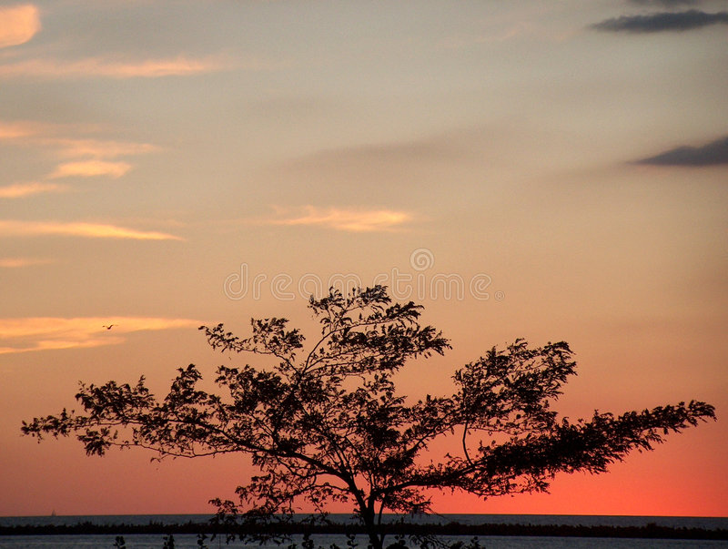 Tree Silhouette. Tree by a lake showing the sunset royalty free stock photo