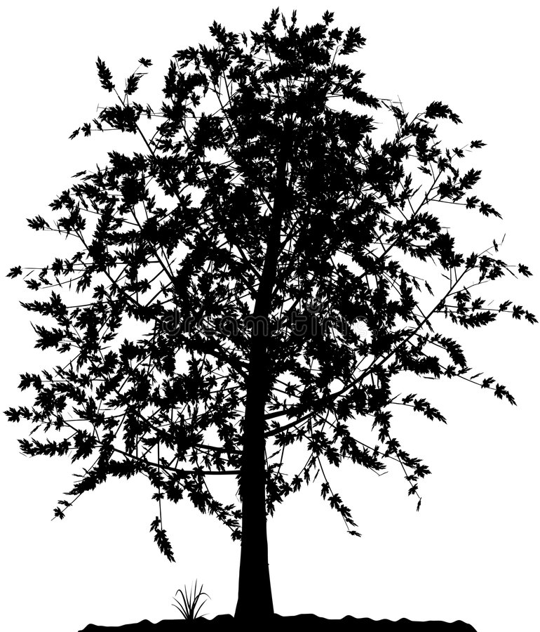 Download Tree Silhouette. Stock Photos - Image: 7123553