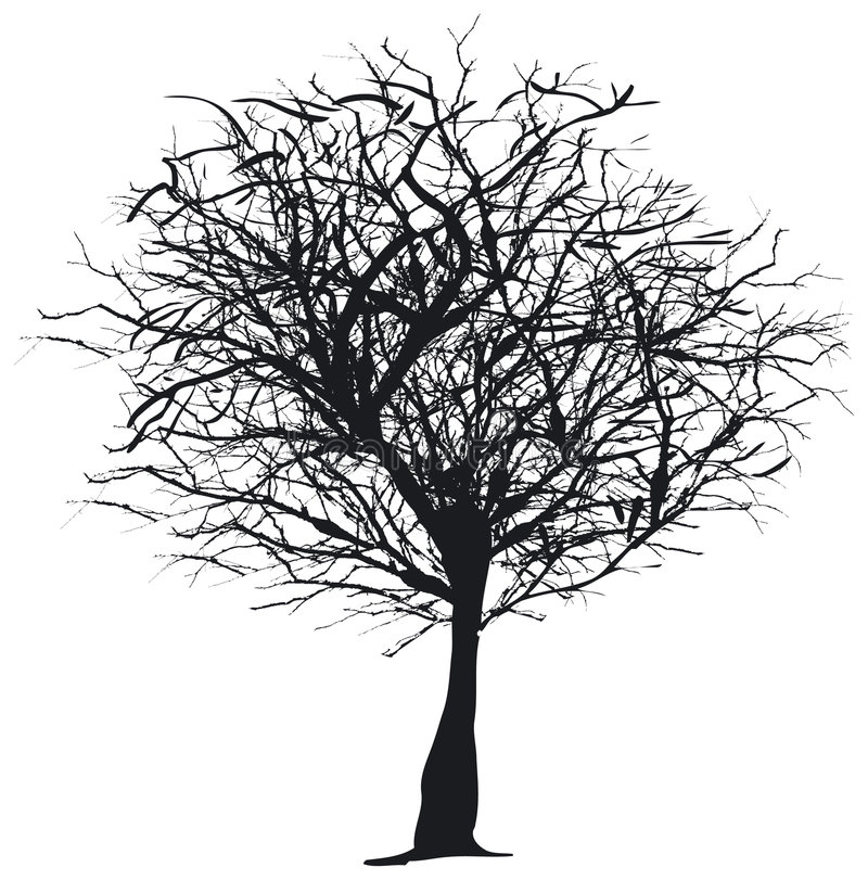 Download Tree silhouette stock vector. Image of forest, wood, bark - 993388
