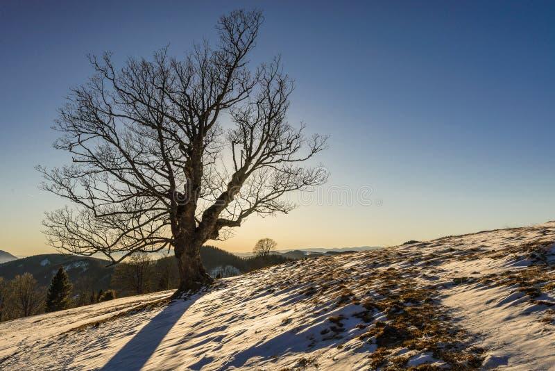 Download Tree Stock Photo - Image: 83716766