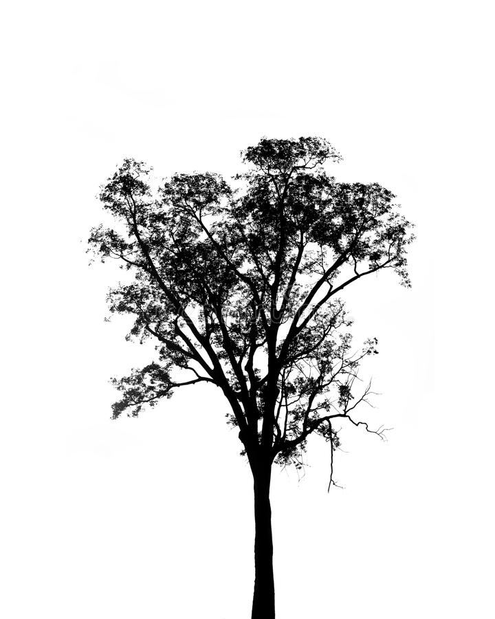 Tree silhouette on back and white background stock photos