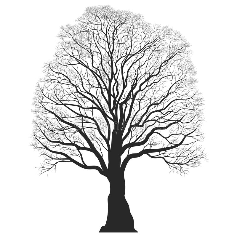 Tree Silhouette. Black bare oak outline. Detailed image. royalty free illustration