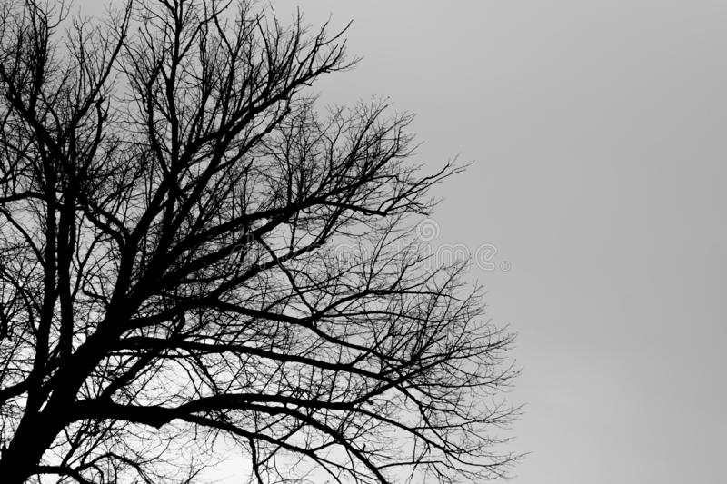 Tree silhouette black and white background. Tree silhouette black and white stock photography