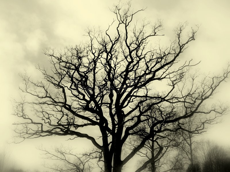Tree silhouette bw. Bare oak tree silhouette against cloudy skies, black and white. Foggy focus filter on periphery