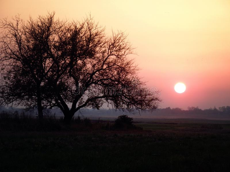 Tree Silhouette in the field at Orange Sunset with Sun stock image