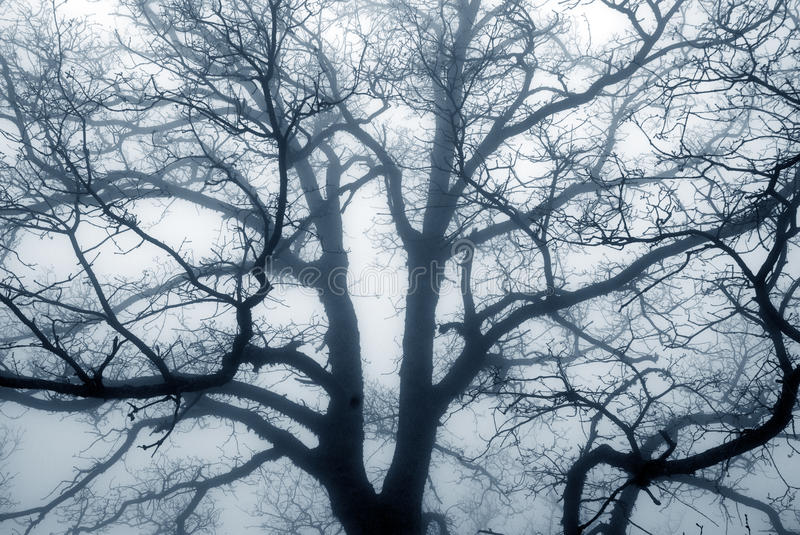 Tree silhouette on a foggy day. royalty free stock photo
