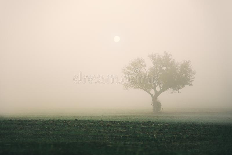Tree silhouette in foggy morning in a frosty field royalty free stock images