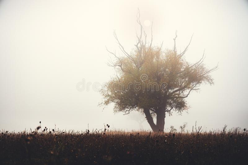 Tree silhouette in foggy morning in a frosty field.  stock images