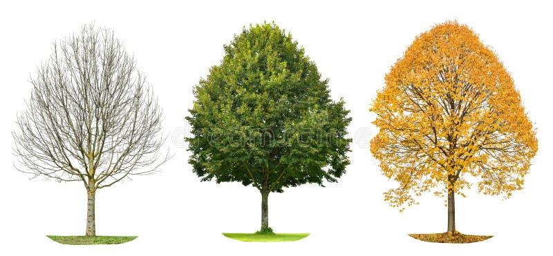 Tree silhouette isolated Spring summer autumn. Tree silhouette isolated on white background. Spring summer autumn stock photos