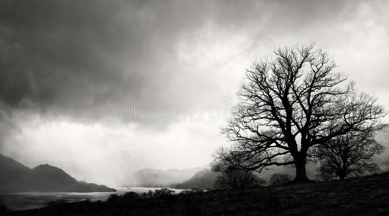 Download Tree Silhouette, Lake District, England Stock Photo - Image of silhouetted, black: 39507772