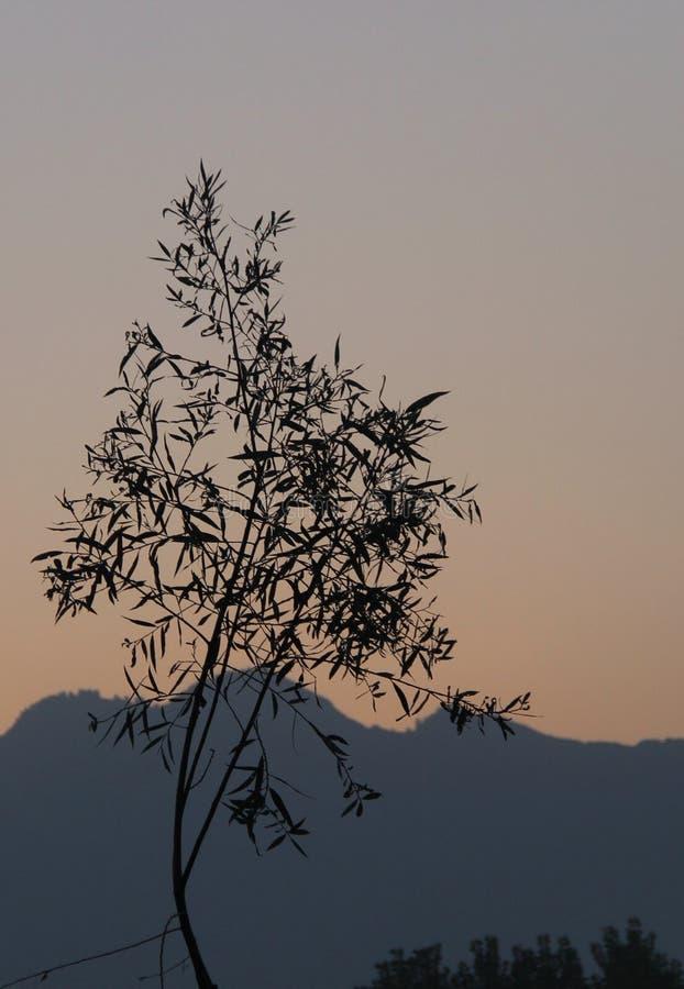 Tree silhouette on mountain background. Tree silhouette on mountain and sunrise background royalty free stock photos