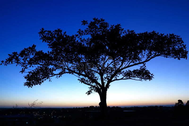 Tree silhouette by dark-blue sky at dusk. The silhouette of an eucalyptus tree by nightfall - in contrast to the remaining colors of a sunset in the horizon. The royalty free stock photography