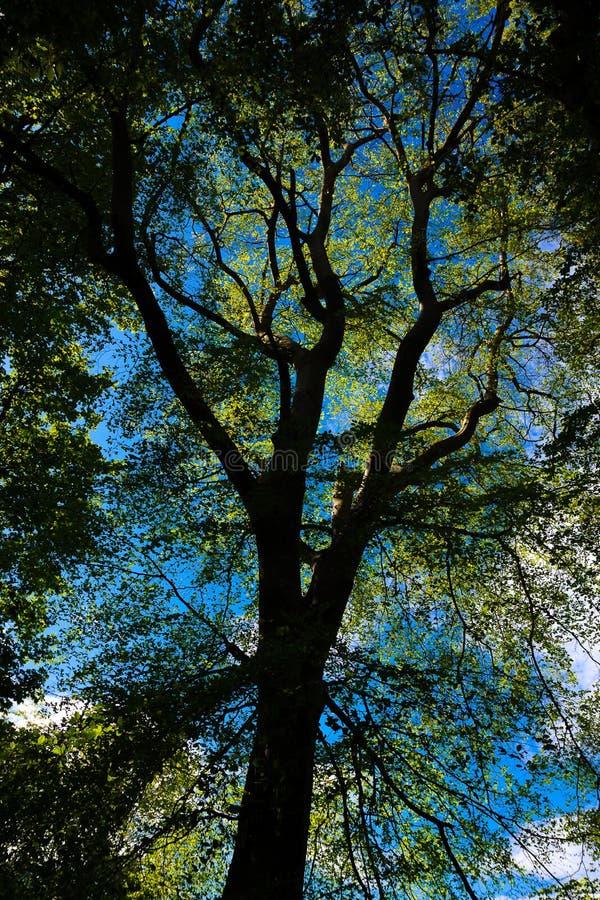 Tree silhouette in Phoenix Park, Dublin, Ierland royalty-vrije stock foto