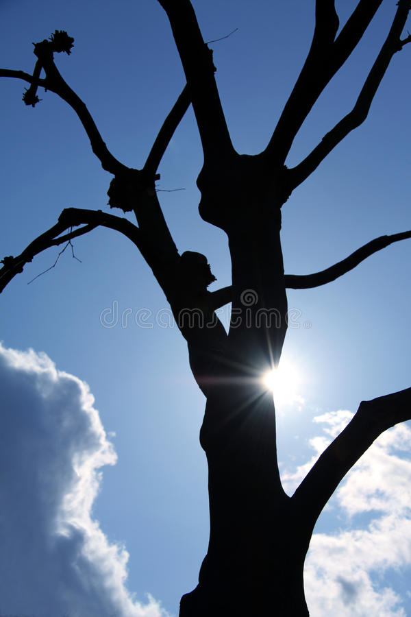 Download Tree Silhouette With Sun Ray Stock Images - Image: 14463024
