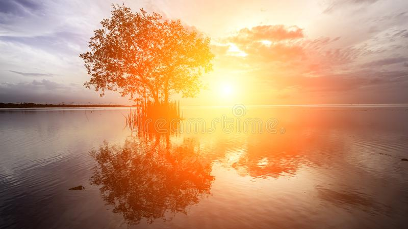 Tree silhouette with sun royalty free stock photo