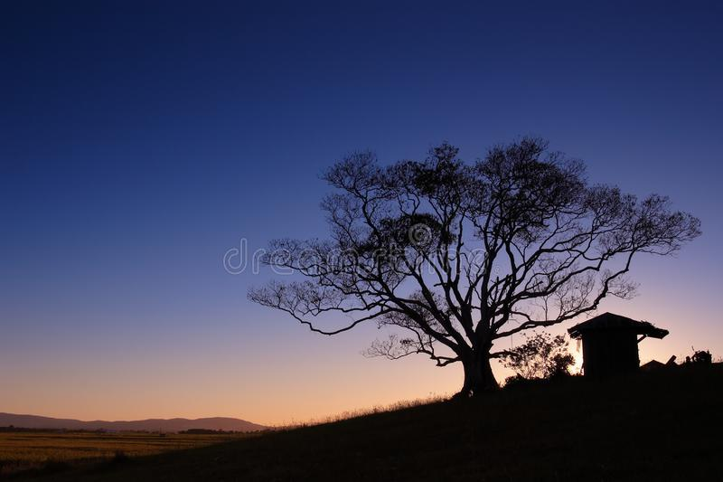 Download Tree Silhouette Sunset stock image. Image of shack, landscape - 8984505