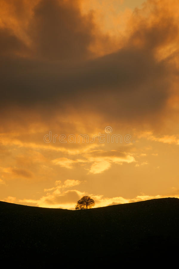 Sunset Dramatic Sky And Tree Silhouette Stock Image