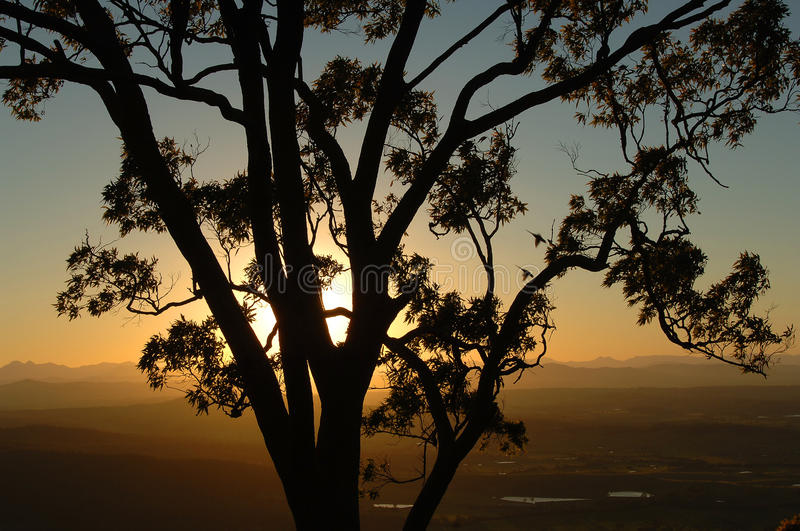 Tree and sunset royalty free stock photos