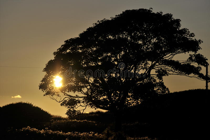 Download Tree silhouetted at sunset stock image. Image of picturesque - 16139097
