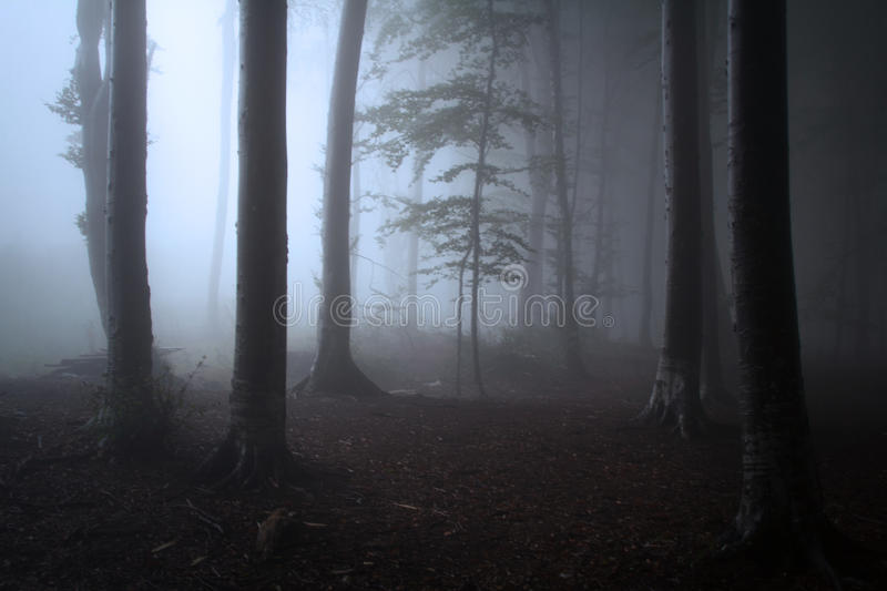 Tree silhouettes in dark forest with mist royalty free stock photo
