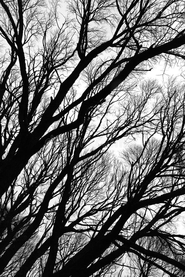 Tree silhouettes isolated royalty free stock photo