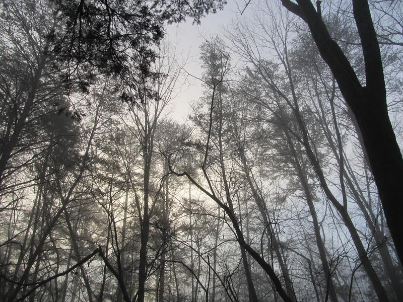 Winter Fog in the Forest stock photo