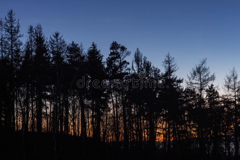 Tree silhouettes with the sunset in the background stock photos