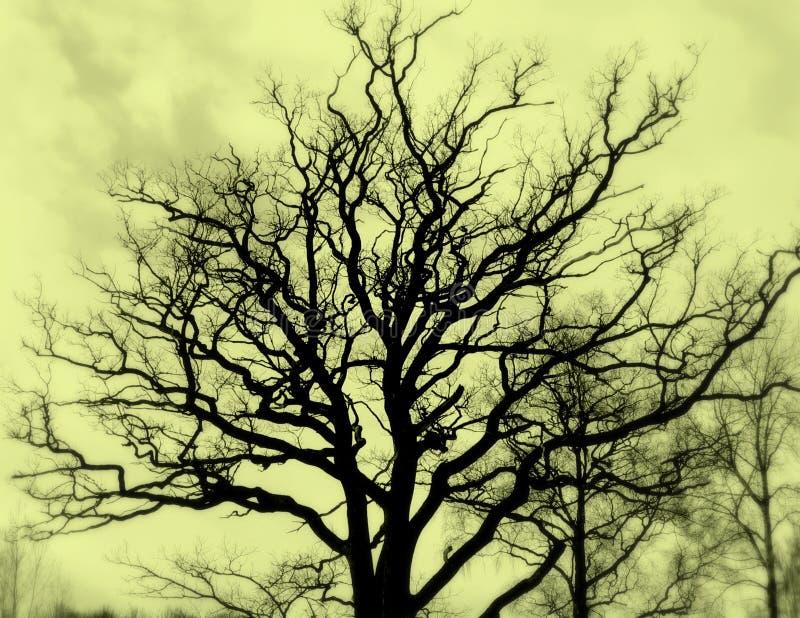 Tree silhuette sepia stock photo