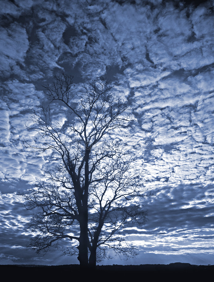 Tree sillouetted against sky royalty free stock images
