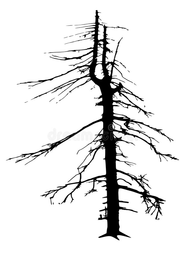 Tree skeleton. A pine tree in mountains dried up by frost and pollution stock illustration