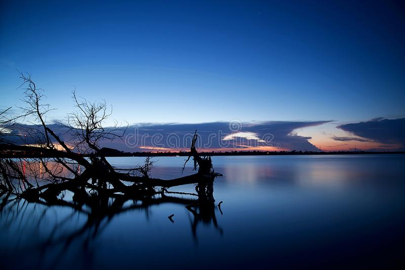 Tree skeleton resting in the lap of a fresh water lake stock photo