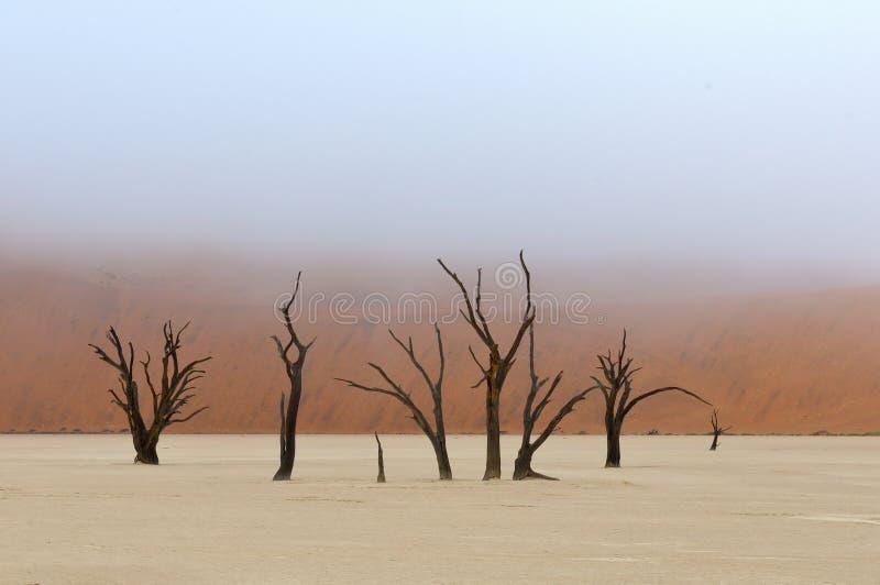 Tree skeletons, Deadvlei, Namibia royalty free stock images