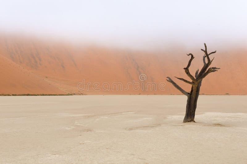 Tree skeletons, Deadvlei, Namibia royalty free stock photography