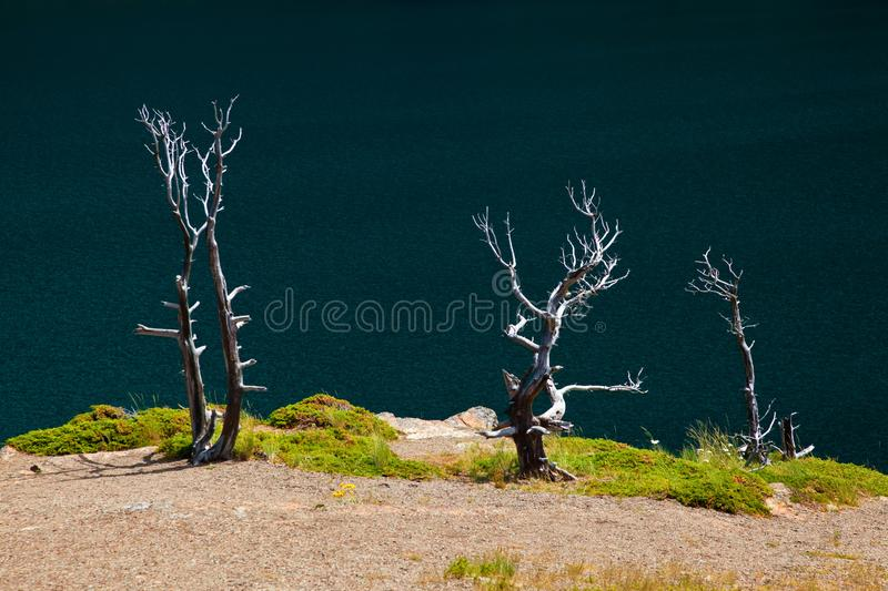 Tree Skeletons on the shore of Saint Mary Lake in Glacier National Park, Montana royalty free stock image