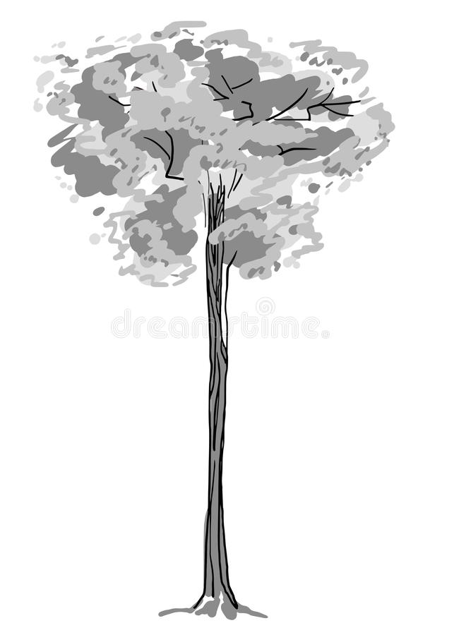 Tree sketch. Black and white drawing isolated on white background. Simple art. Can be used for card banner template stock photos