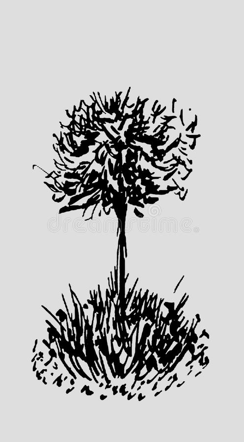 Tree sketch.Vintage illustration, engraved style. Hand drawn ink. Back line drawing Isolated on light gray background. For landscape, park, outdoors design vector illustration