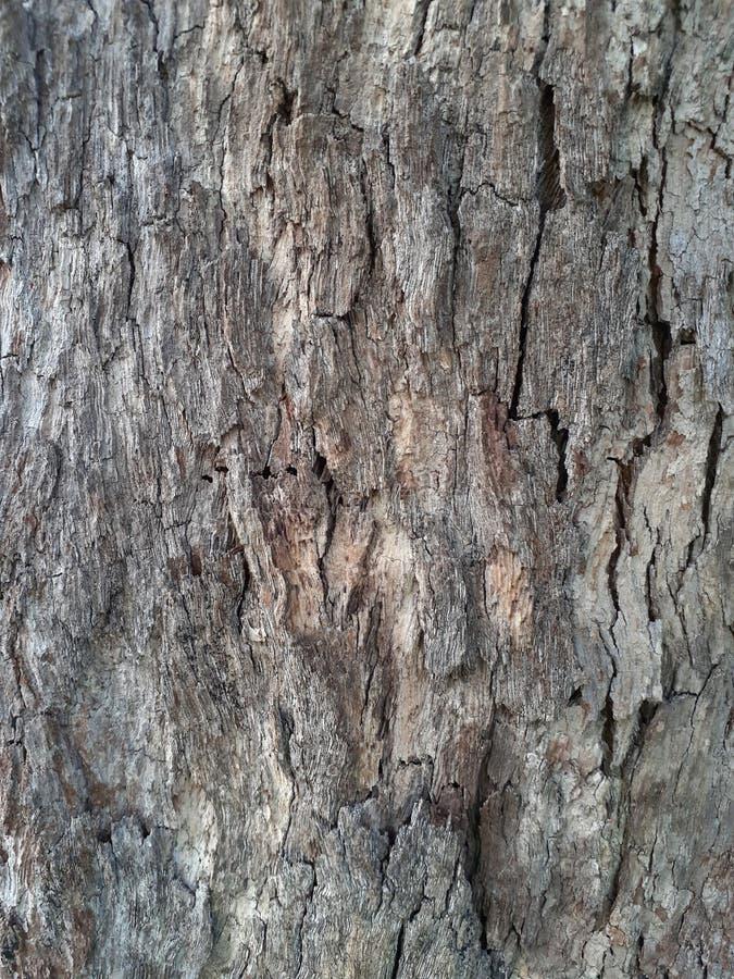 Tree Skin Tree Bark imagens de stock royalty free